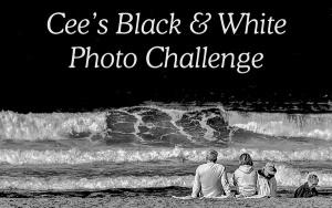 cee black-white-banner